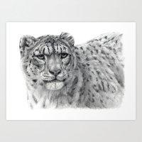 Panthera Uncia G003 Art Print