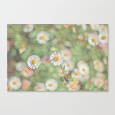 Sunbathing Daisies Canvas Print