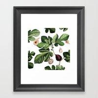 Figs White Framed Art Print
