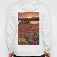 Sea of poppies at the lake Hoody