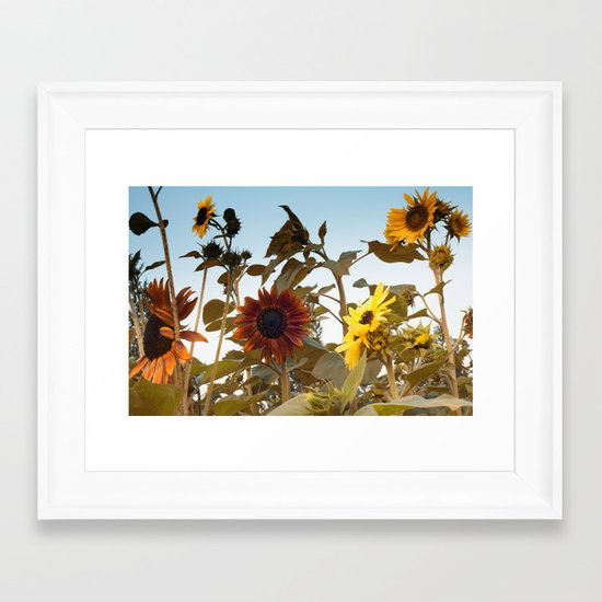 Red Sunflower... Framed Art Print