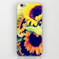 Always Sunny Sunflowers iPhone & iPod Skin
