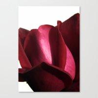 lovely rose Canvas Print