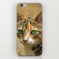 FELINE FINE iPhone & iPod Skin