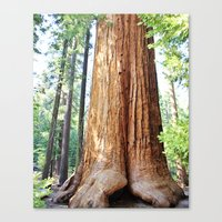 Trail of 100 Giants Canvas Print