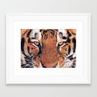 Tiger Close-up Framed Art Print