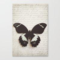 Papilio Aegus Butterfly Canvas Print