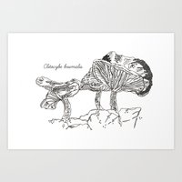 Clitocybe Brumalis // Ha… Art Print