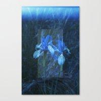 Iris on Film Canvas Print