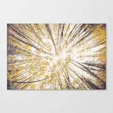 fall looking up Canvas Print