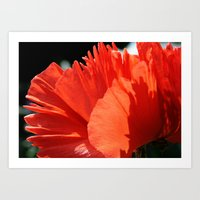 Poppy - Side Art Print