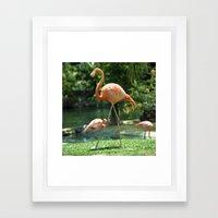 Pretty Flamingo  Framed Art Print
