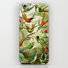 Kunstformen der Natur (Art Forms in Nature)a book of lithographic and halftones. Hummingbirds iPhone & iPod Skin