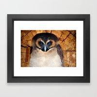 Asian wood Owl Framed Art Print