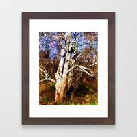 Old Sycamore tree Framed Art Print