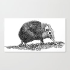 Black Shrew Canvas Print