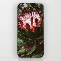 Protea and Raindrops  iPhone & iPod Skin