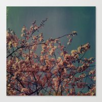 Cherry Blossoms, Polaroi… Canvas Print