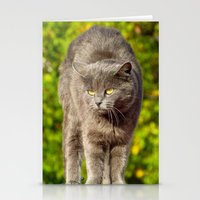 catz Stationery Cards