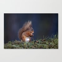RED SQUIRREL EATING Canvas Print