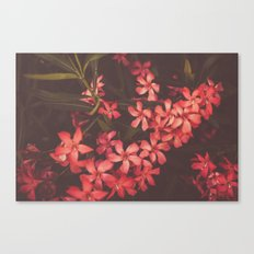 Coral Flower Tales Canvas Print