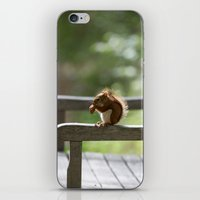 Red Squirrel Snack Time iPhone & iPod Skin