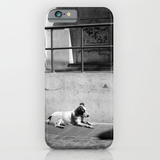 Stray Dog iPhone & iPod Case