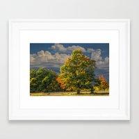 Autumn Tree near Sleeping Bear Dunes Framed Art Print