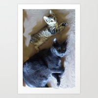 Kitty See Kitty Do... Art Print
