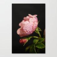 Weeping Rose II Canvas Print