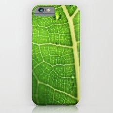 Fiddle Leaf Ficus Tree iPhone 6 Slim Case
