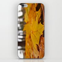 Golden Leaves iPhone & iPod Skin
