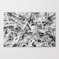 drift wood Canvas Print