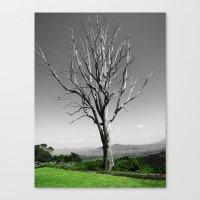 Blue Gum Tree Canvas Print