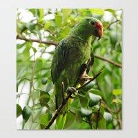 Parrot Portrait Canvas Print
