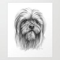 Lhassa Apso Portrait G10… Art Print