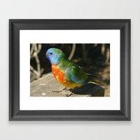Red Scarlet Chested Parrot Framed Art Print