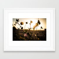 Summer Evening Framed Art Print