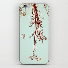 Delicate like breeze iPhone & iPod Skin