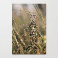 Stinging Nettle Canvas Print