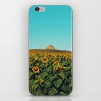 Sunflower Scene iPhone & iPod Skin