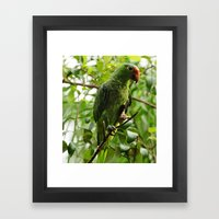 Parrot Portrait Framed Art Print