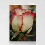 Peppermint Rose Stationery Cards