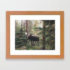 The Modest Moose Framed Art Print