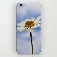 Daisy Daisy iPhone & iPod Skin