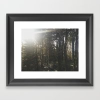 Of Light & Trees Framed Art Print