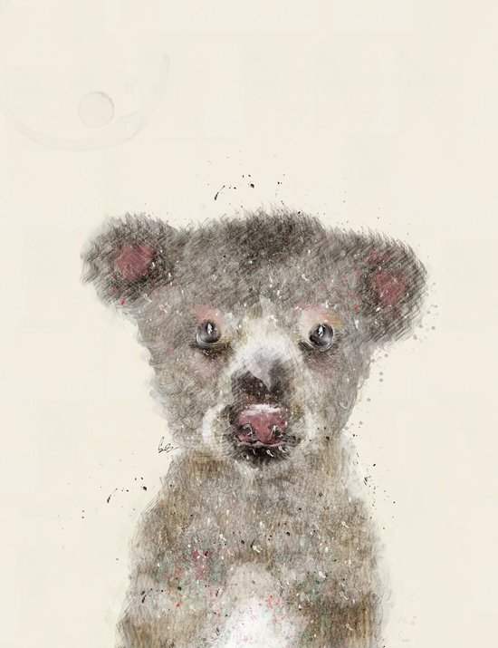 little koala Art Print