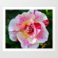 Blood spatter rose Art Print
