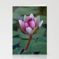 Water Lily 5 Stationery Cards