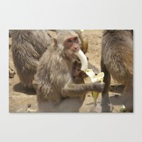 Breakfast for Monkeys  Canvas Print